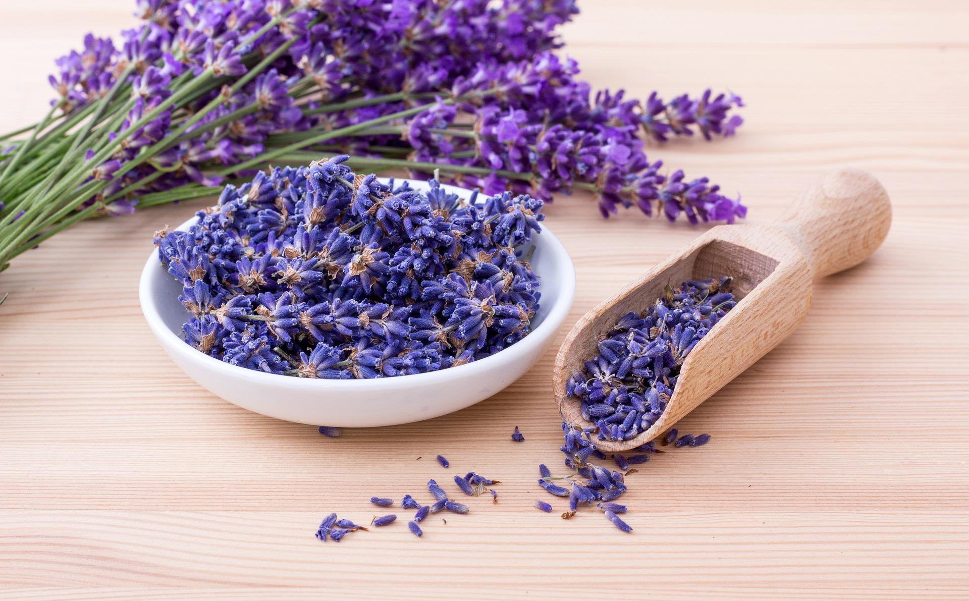 lavender-6097821_1920